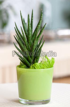piccola pianta della casa in vaso