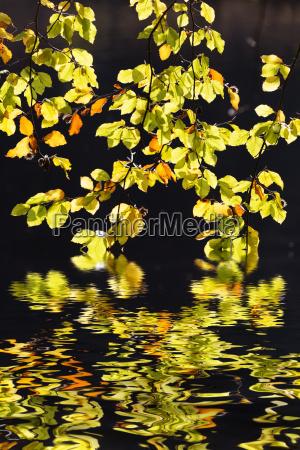 foglie quiete silenzio tranquillita riflesso riposo