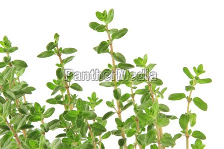 spezia rilasciato opzionale verde foglie rami