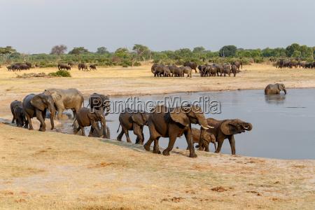 gambe enorme bere parco animale mammifero