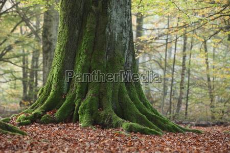 vecchi alberi nel parco nazionale di