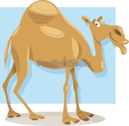 illustrazione del fumetto cammello dromedario