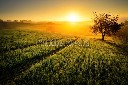 idillio rurale nella luce dorata