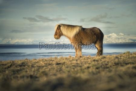 viaggio viaggiare colore montagne acque cavallo