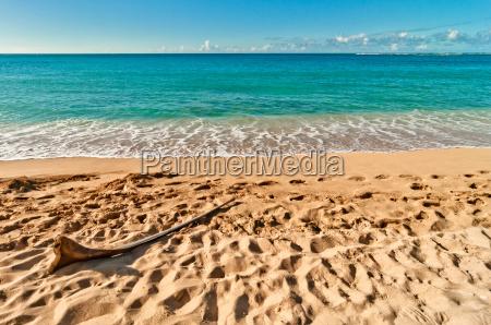 esotico tropicale isola acqua salata mare