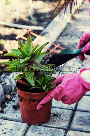 casa costruzione fiore pianta flora piantine