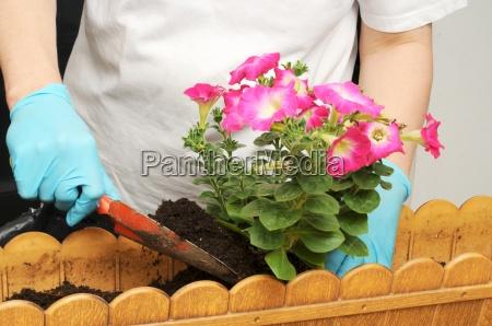 petunie piantare balcone spazi verdi