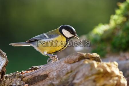 uccello selvaggio uccelli ala becco piumaggio