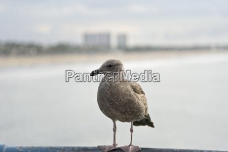 animale uccello riva del mare spiaggia