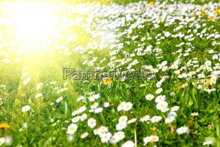 luce giardino fiore pianta verde fioritura
