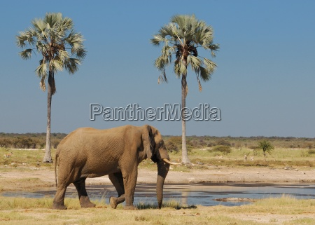 bere albero alberi animale selvaggio africa