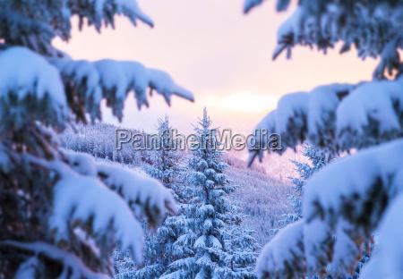 inverno alpi europa abete rosso prealpino