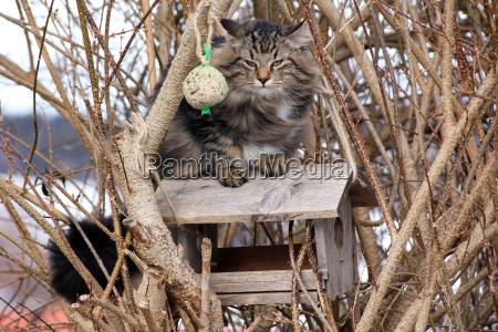 un gatto sulla casetta degli uccelli