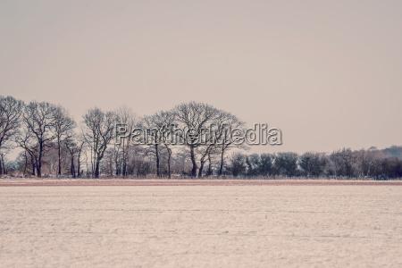 bello bella ambiente albero inverno freddo