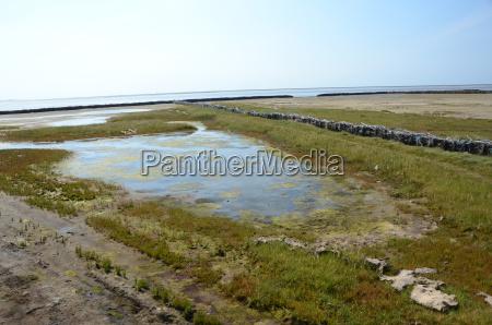 verde conservazione della natura acqua mare