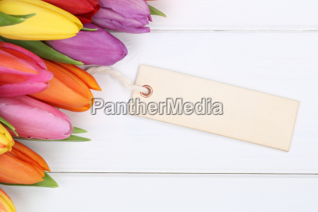 fiori di tulipano in primavera o