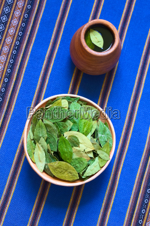 dried coca leaves and fresh coca