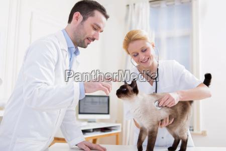 donna risata sorrisi animale domestico peluche