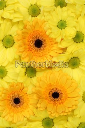 bello bella fiore pianta romantico fiori