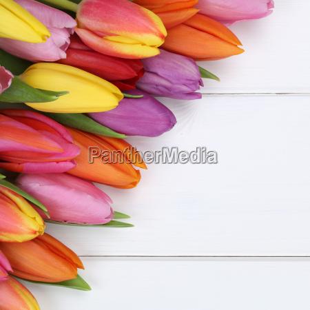 fiori di tulipano in primavera pasqua