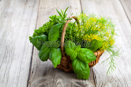 foglia giardino verde legno estate freschezza