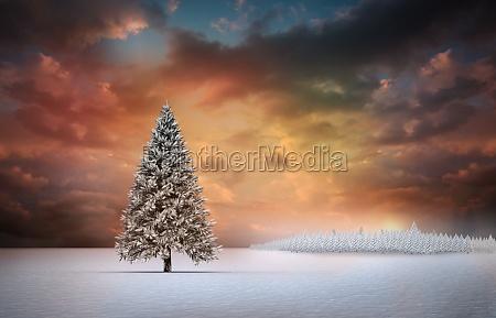 ambiente albero inverno tramonto alba abete