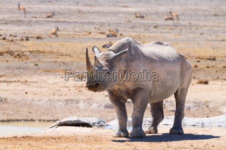 viaggio viaggiare bere animale parco nazionale