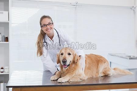 sorridente controllare che esamina un labrador