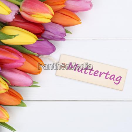 bello bella fiore pianta romantico colorato