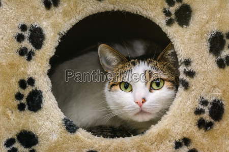 animale animale domestico peluche gatto gatta