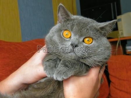animale animali domestici cane cucciolo gatto