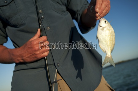 blu animale pesce stati uniti damerica