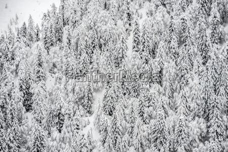 albero inverno abete orizzontale allaperto giorno