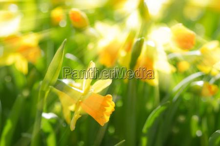 bello bella parco giardino fioritura fiorire