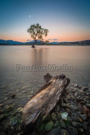 albero solitario sul lago wanaka in