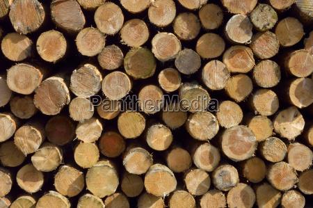 albero legno ramo sezione trasversale tronco