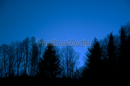 blu albero albero caduco nero sera