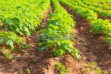 cibo foglia cultura giardino suolo terra