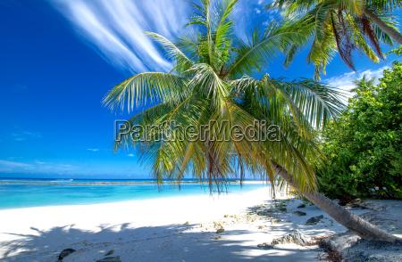 solitaria spiaggia con le palme