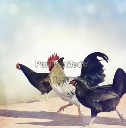 andare animale uccello agricoltura luce del