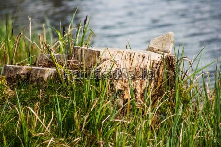 albero acqua dolce stagno acqua tronco