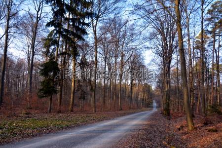 albero alberi alberi spogli luce del