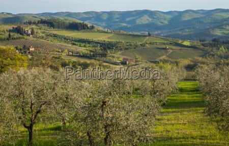 albero agricoltura vino vigneti acqua mediterraneo