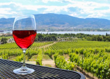 bicchiere vino vigneto fuori sguardo vista