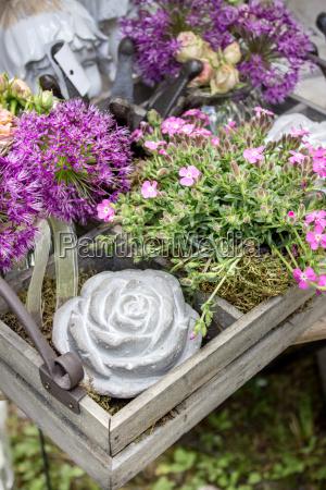 foglia giardino fiore pianta marrone fioritura