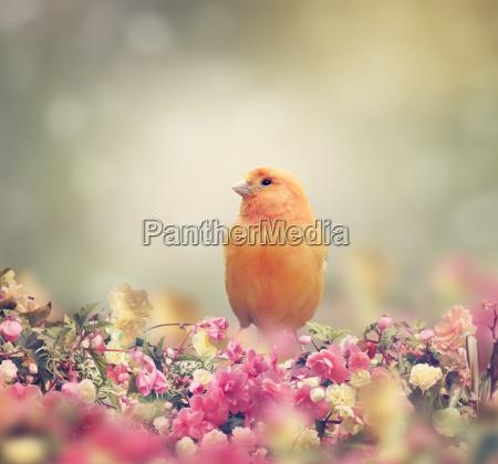 uccello giallo
