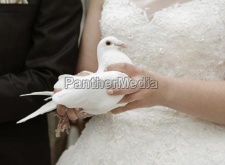nozze matrimonio convivenza sposare piccione abito