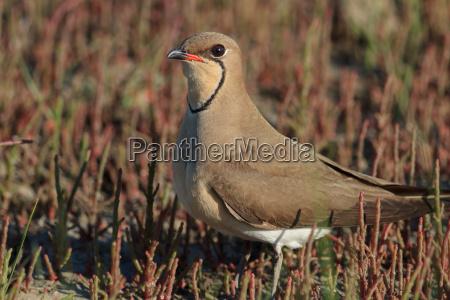 animale uccello in piedi natura posto