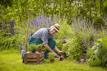 piante da giardino man