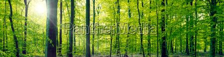 luce foglia ambiente albero parco legno